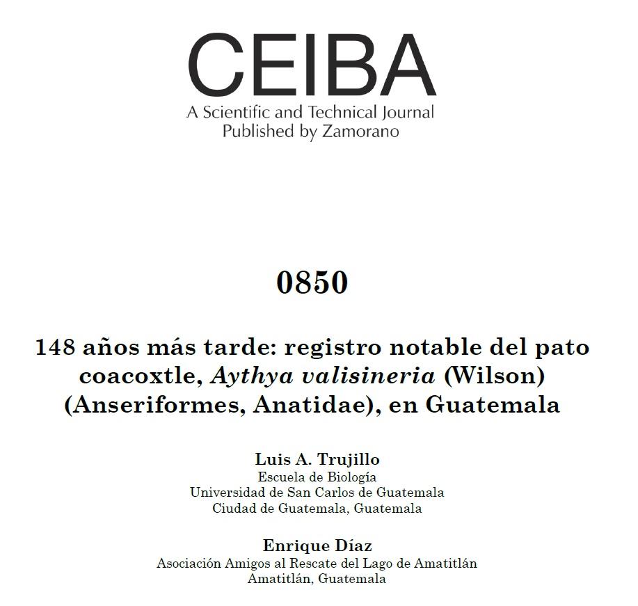Ver Núm. 0850 (2021): 148 años más tarde: registro notable del pato coacoxtle, Aythya valisineria (Wilson) (Anseriformes, Anatidae), en Guatemala